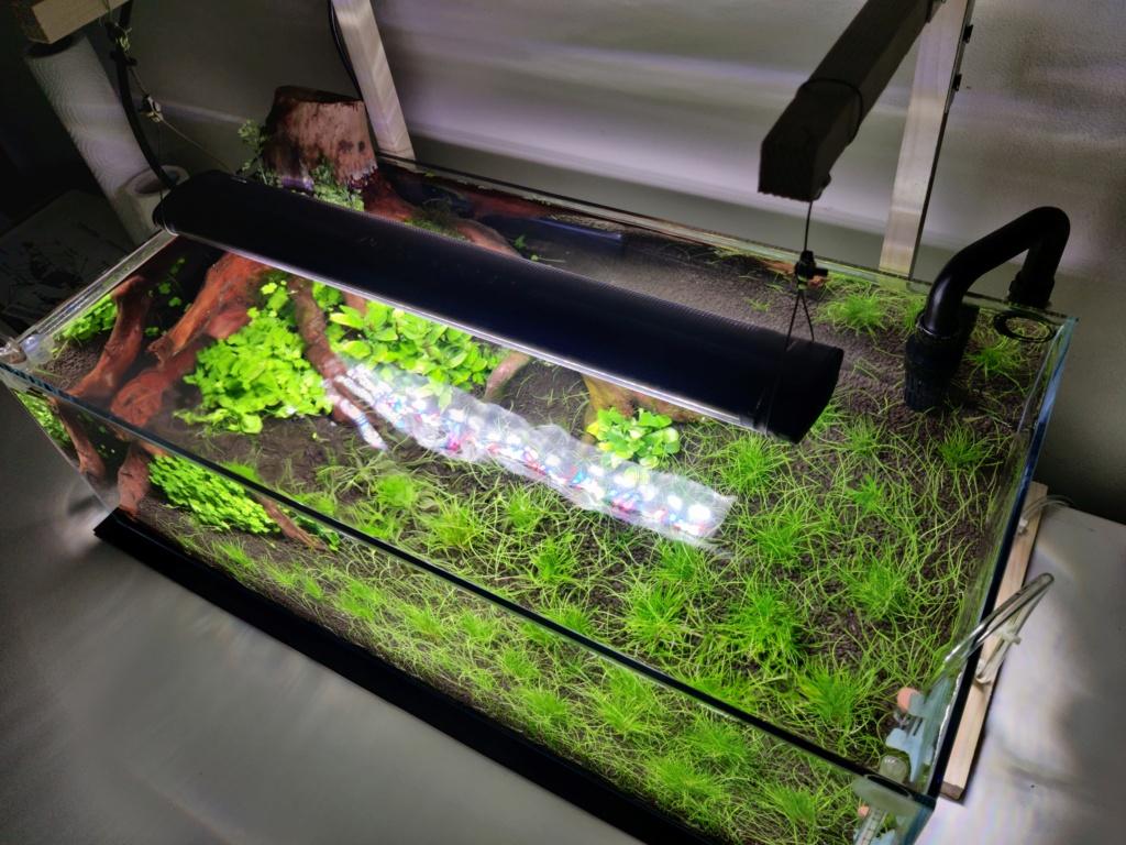Ada cube garden 60F Drystart Img_2081