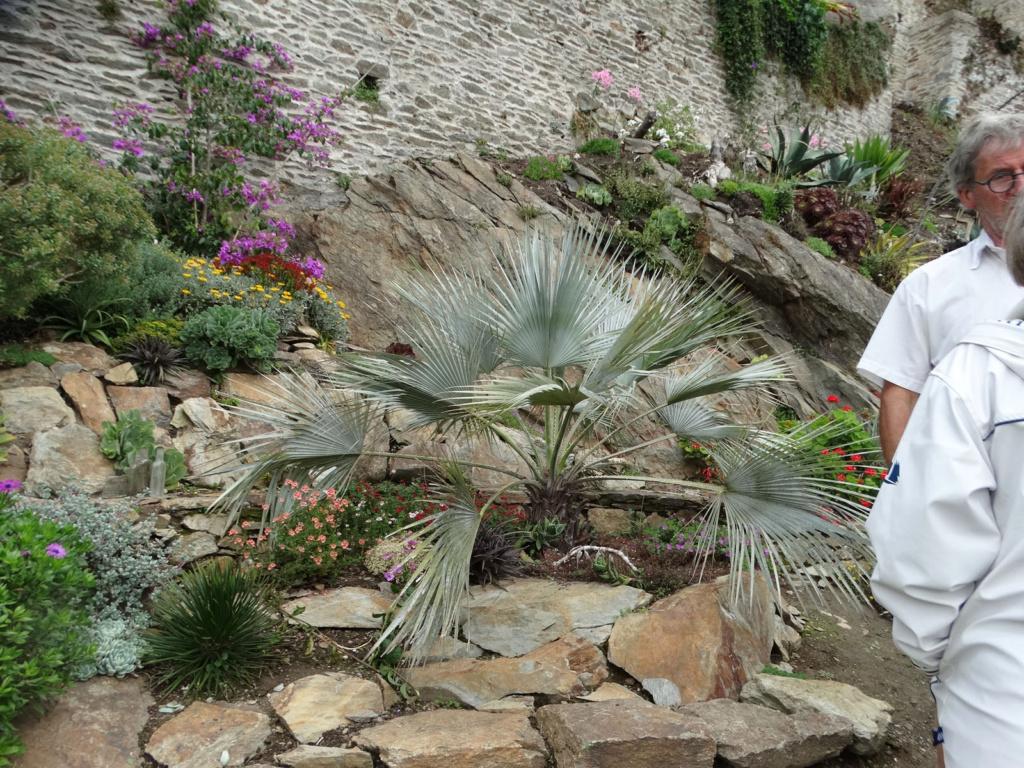 Jardin extraordinaire sur les falaises de Brest 1_brah11