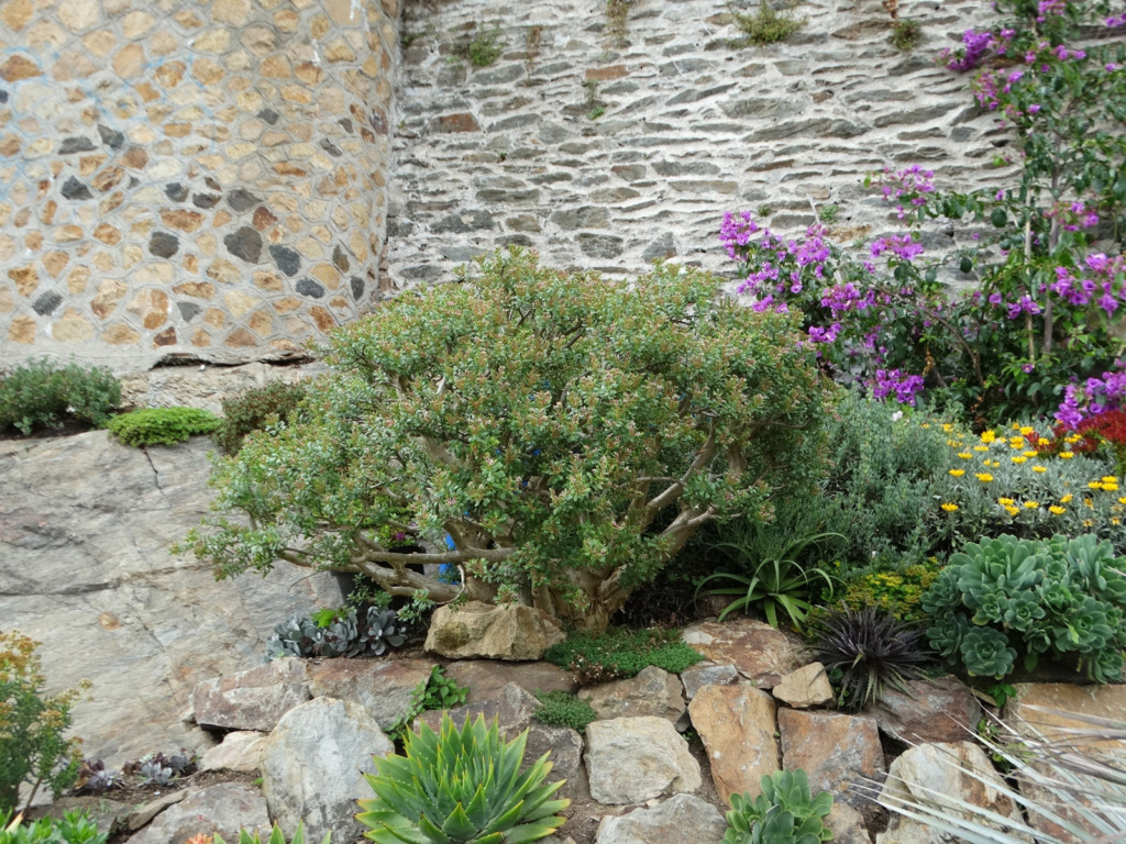 Jardin extraordinaire sur les falaises de Brest 2_sedu11