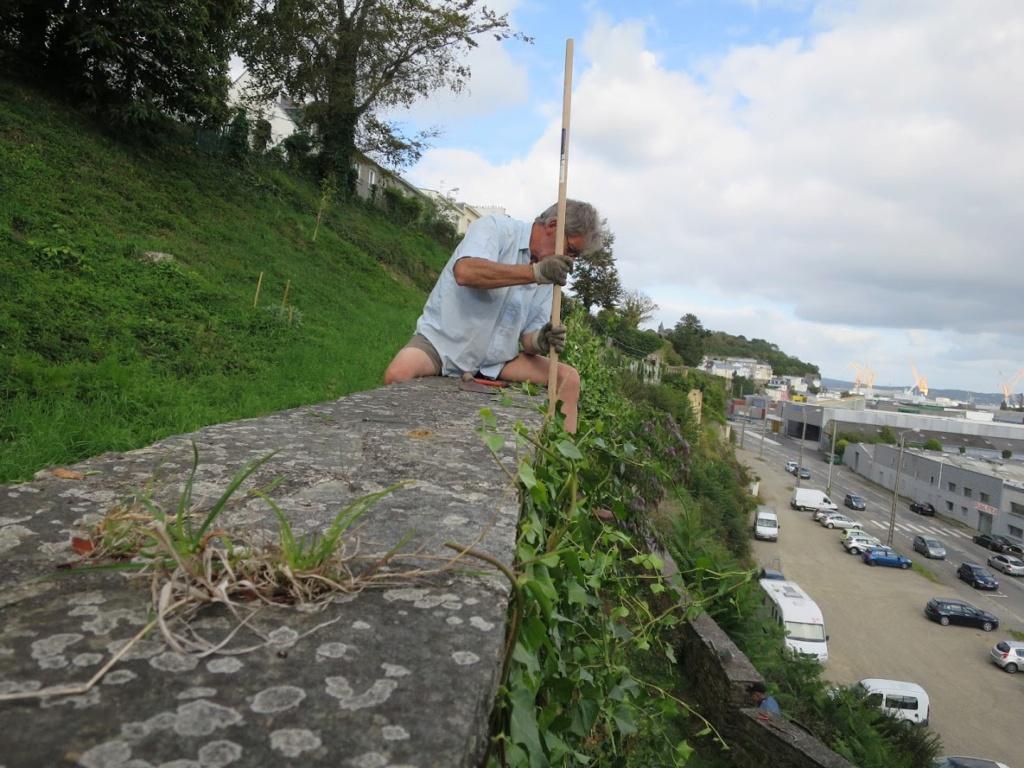 Jardin extraordinaire sur les falaises de Brest 4_img_10