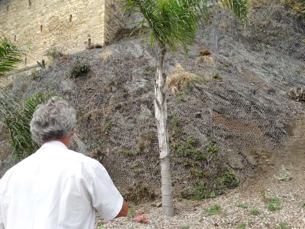 Jardin extraordinaire sur les falaises de Brest 5_palm10