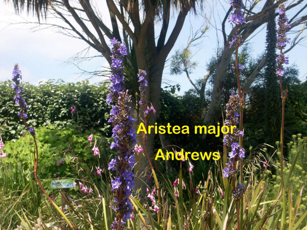 (29) Jardin exotique de Roscoff Ariste12
