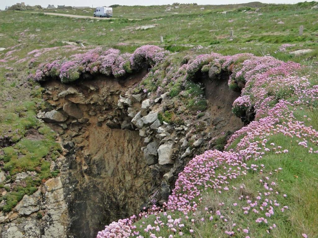 Balade sur la côte sauvage en Finistère-Nord Armeri10