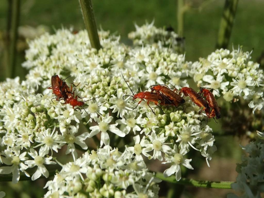 """Déficoncours """"Les insectes sur les plantes"""" - les participations - Page 2 Cantha10"""
