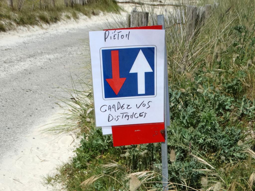 Balade sur la côte des Légendes entre Kerlouan et Brignogan-Plages Dsc00322