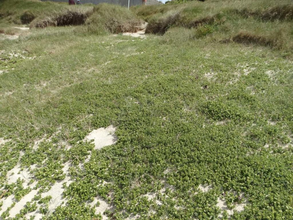 Balade sur la côte des Légendes entre Kerlouan et Brignogan-Plages Dsc00333