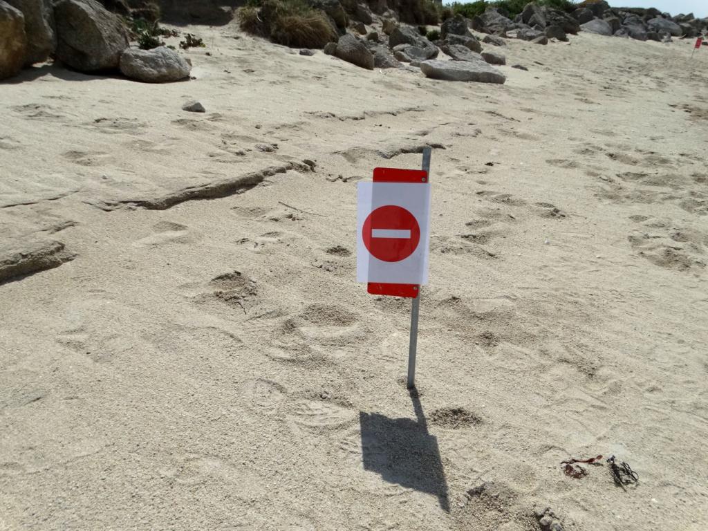 Balade sur la côte des Légendes entre Kerlouan et Brignogan-Plages Dsc00337