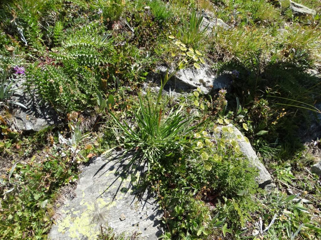 Randonnée à Bonneval-sur-Arc (Maurienne) Dsc04223