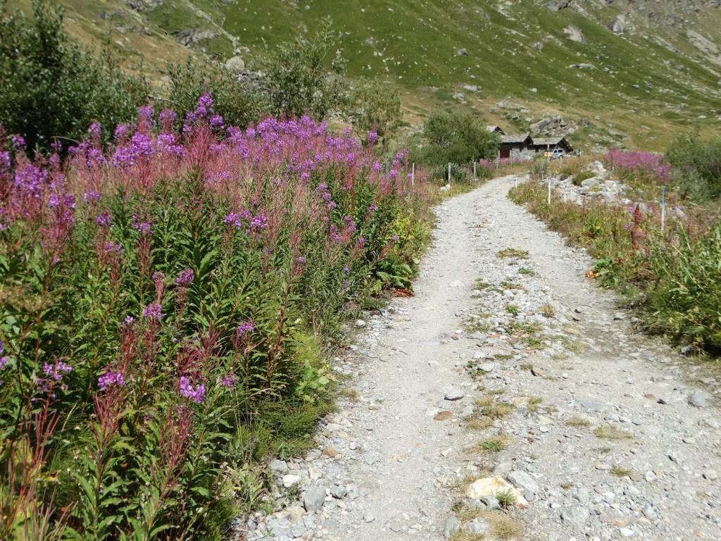 Randonnée à Bonneval-sur-Arc (Maurienne) Dsc04225