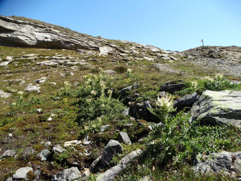 Randonnée à Bonneval-sur-Arc (Maurienne) Dsc04312