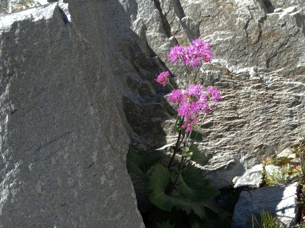 Randonnée à Bonneval-sur-Arc (Maurienne) Dsc04318