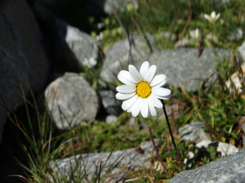 Randonnée à Bonneval-sur-Arc (Maurienne) Dsc04319