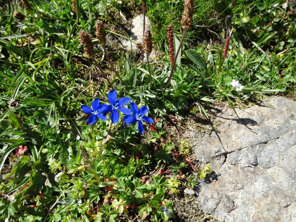 Randonnée à Bonneval-sur-Arc (Maurienne) Dsc04320