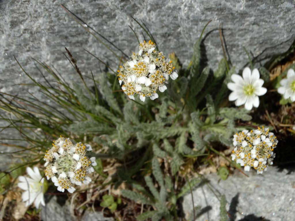 Randonnée à Bonneval-sur-Arc (Maurienne) Dsc04321