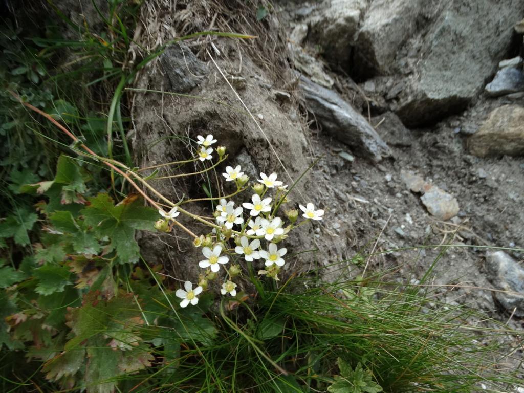 Randonnée dans le Val d'Ayas (Val d'Aoste- Italie) Dsc04422