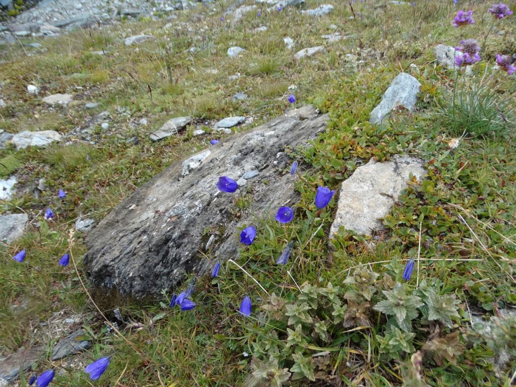 Randonnée dans le Val d'Ayas (Val d'Aoste- Italie) Dsc04424