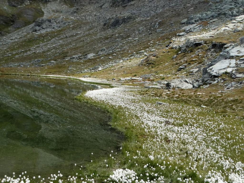 Randonnée dans le Val d'Ayas (Val d'Aoste- Italie) Dsc04427