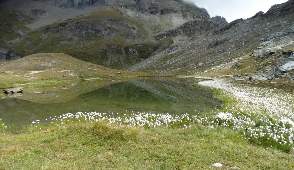 Randonnée dans le Val d'Ayas (Val d'Aoste- Italie) Dsc04428
