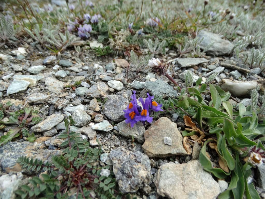 Randonnée dans le Val d'Ayas (Val d'Aoste- Italie) Dsc04435