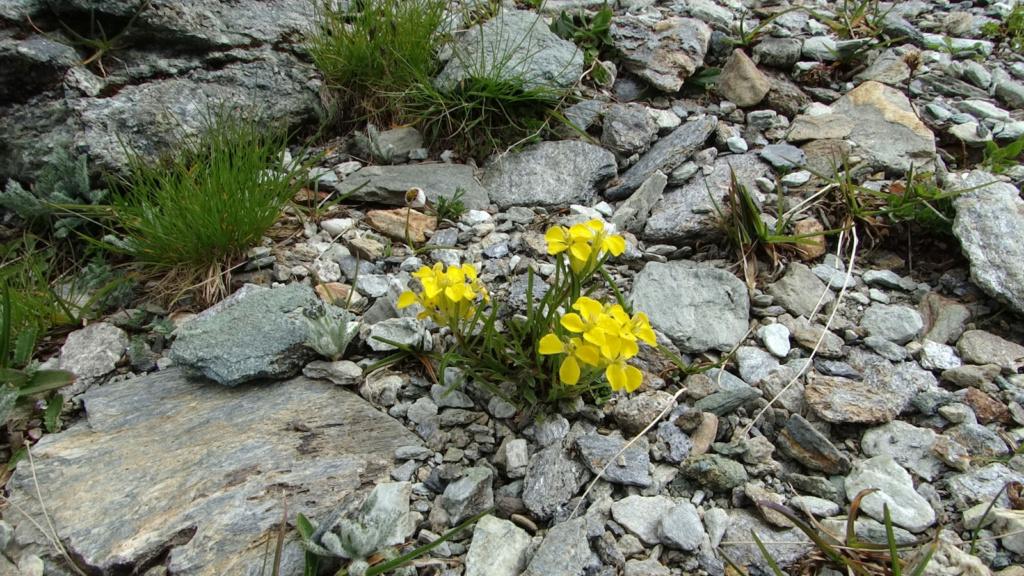 Randonnée dans le Val d'Ayas (Val d'Aoste- Italie) Dsc04437