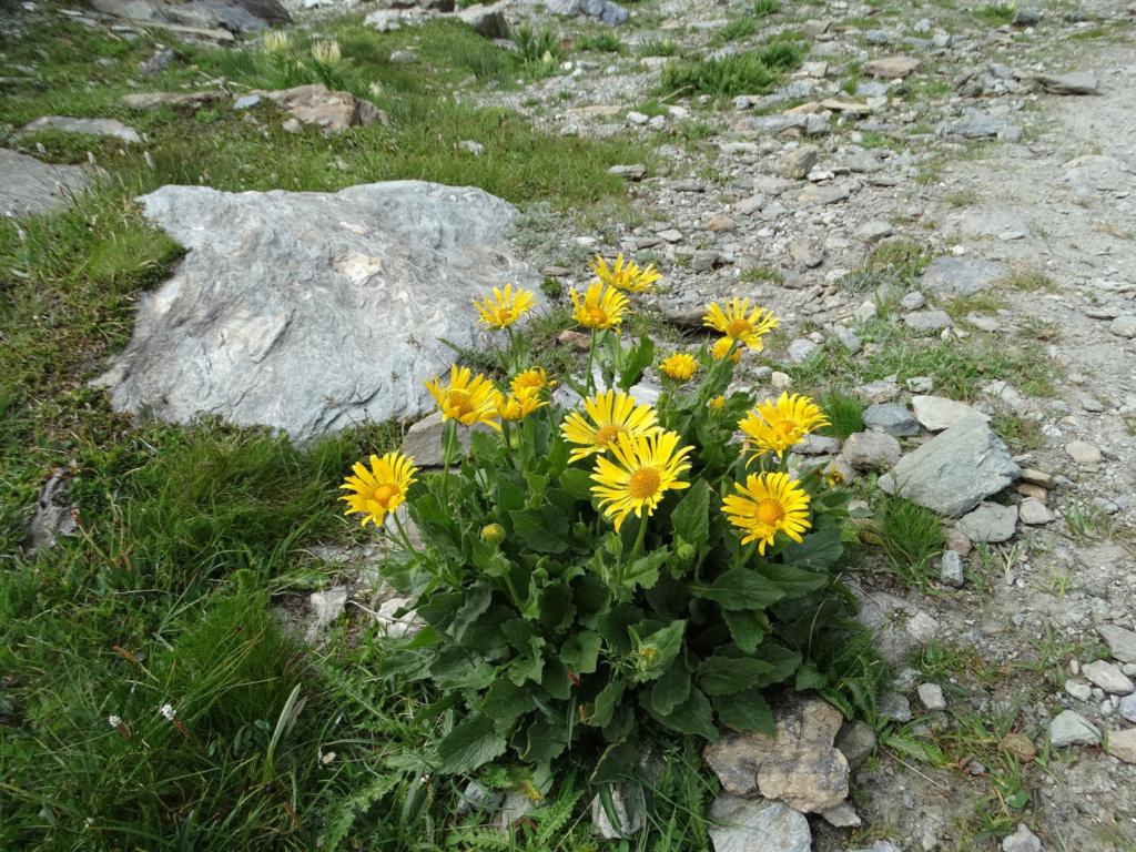 Randonnée dans le Val d'Ayas (Val d'Aoste- Italie) Dsc04441