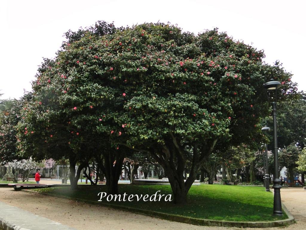 Camellia - choix & conseils de culture - Page 3 Dsc07910