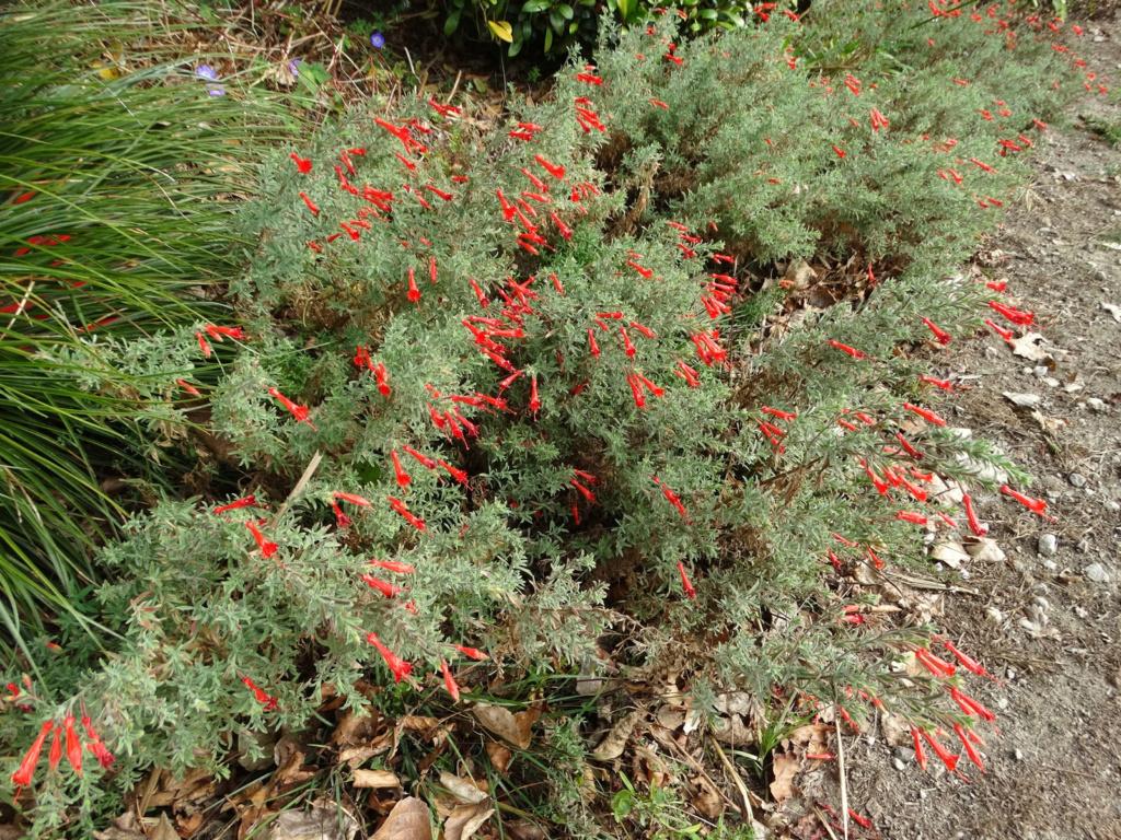 Dernières fleurs d'été, premiers feux d'automne Epilob10