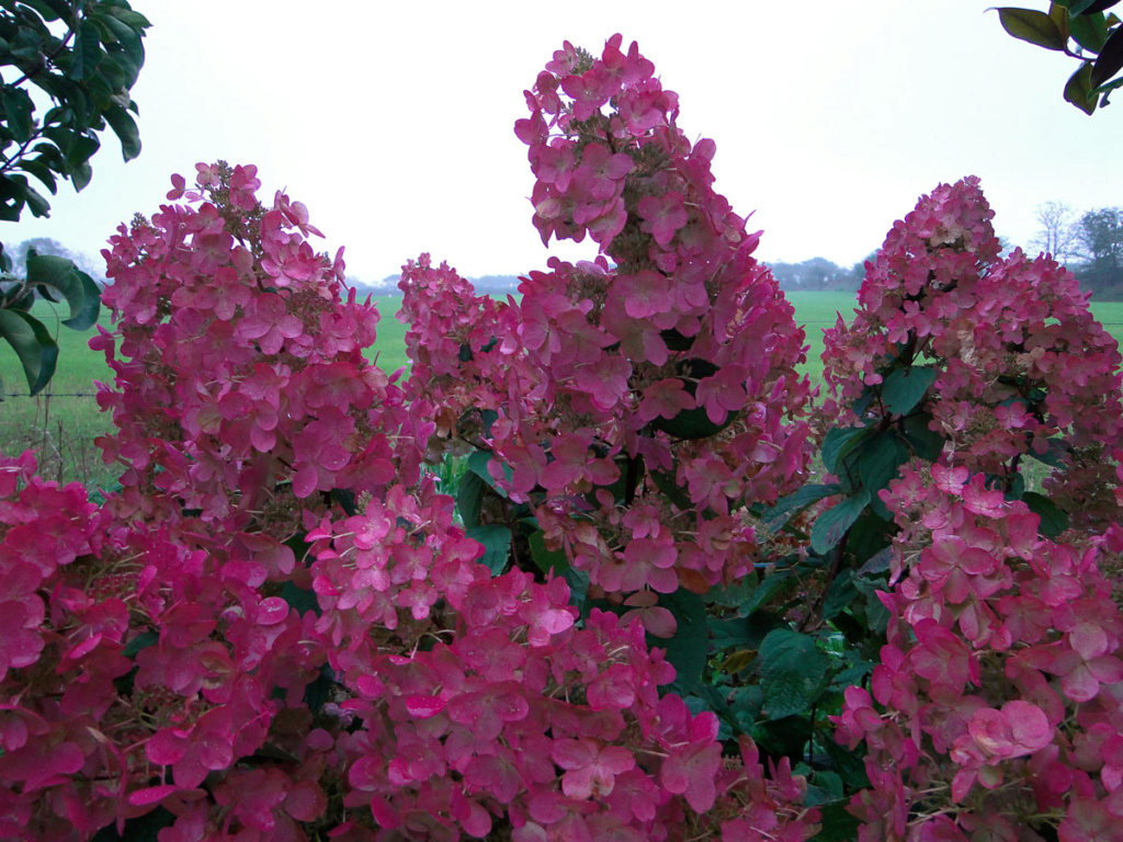 Panier estival - Page 2 H_pink10