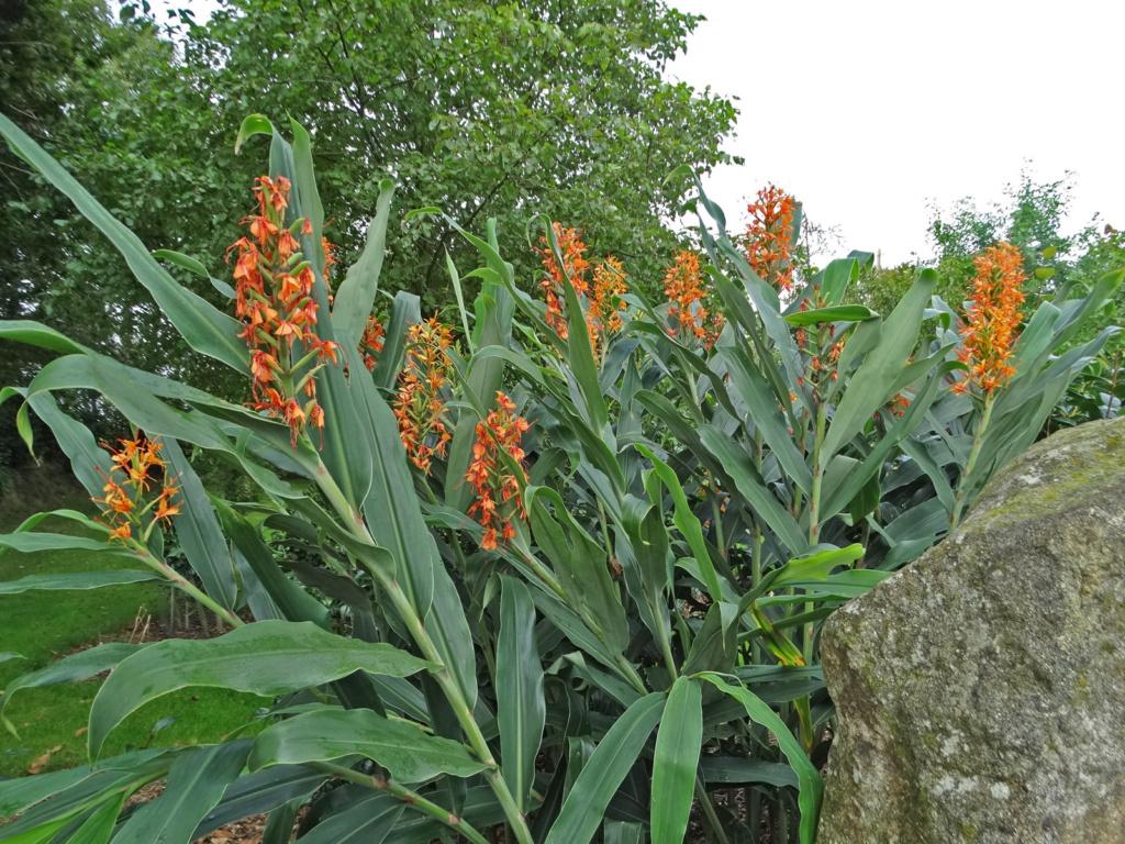Dernières fleurs d'été, premiers feux d'automne Hedych11