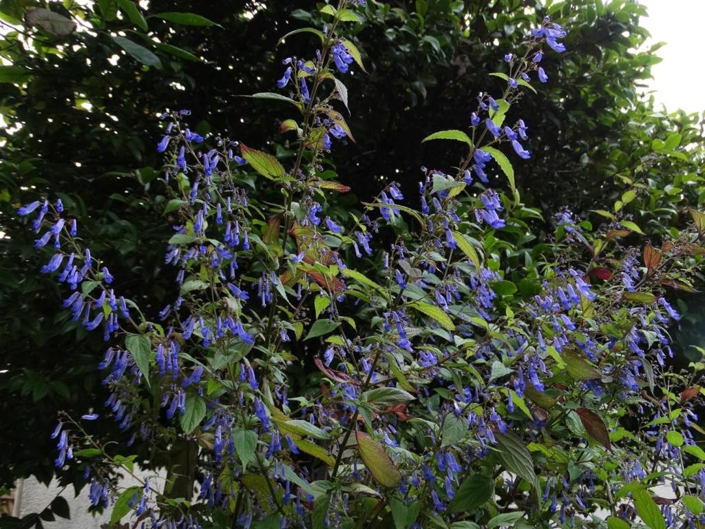 Brumes de fleurs Isodon10