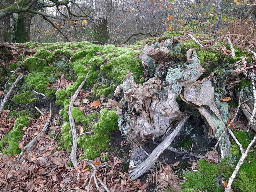 Mousses, lichens et autres fantaisies de l'hiver Mousse11