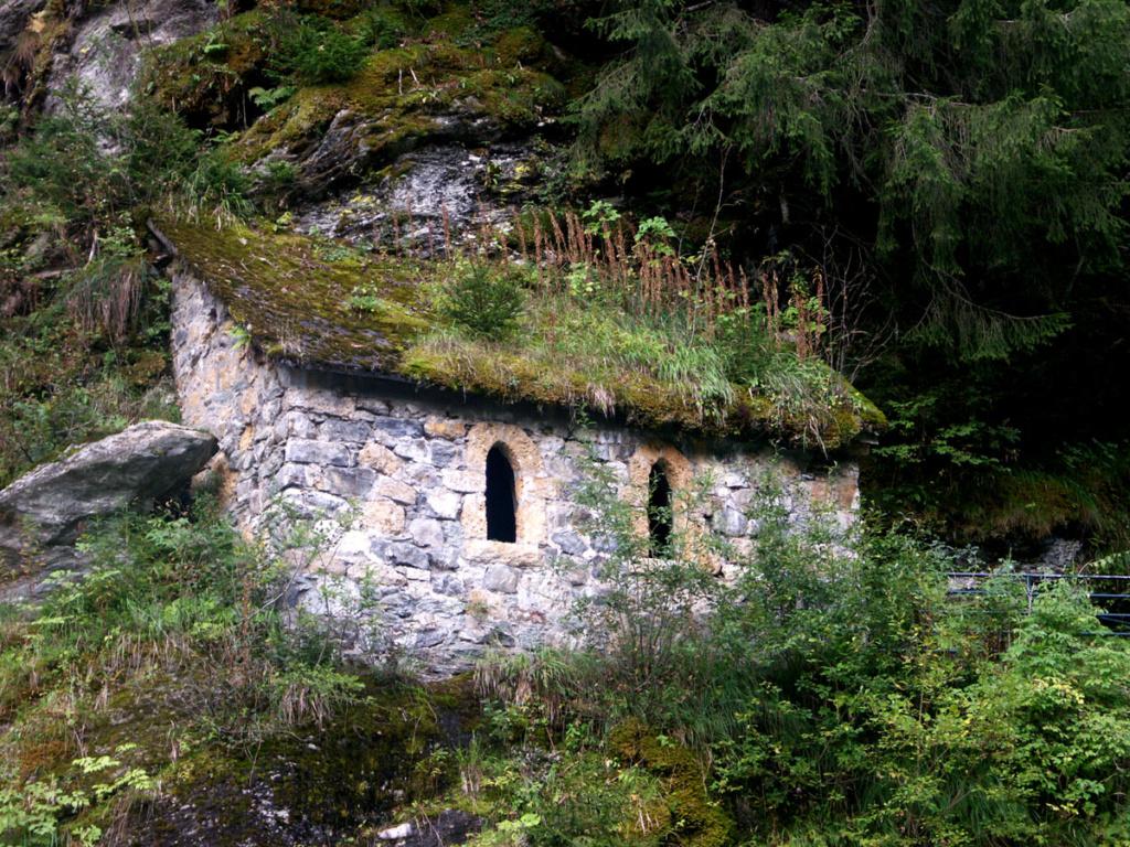 Mousses, lichens et autres fantaisies de l'hiver Pict0310