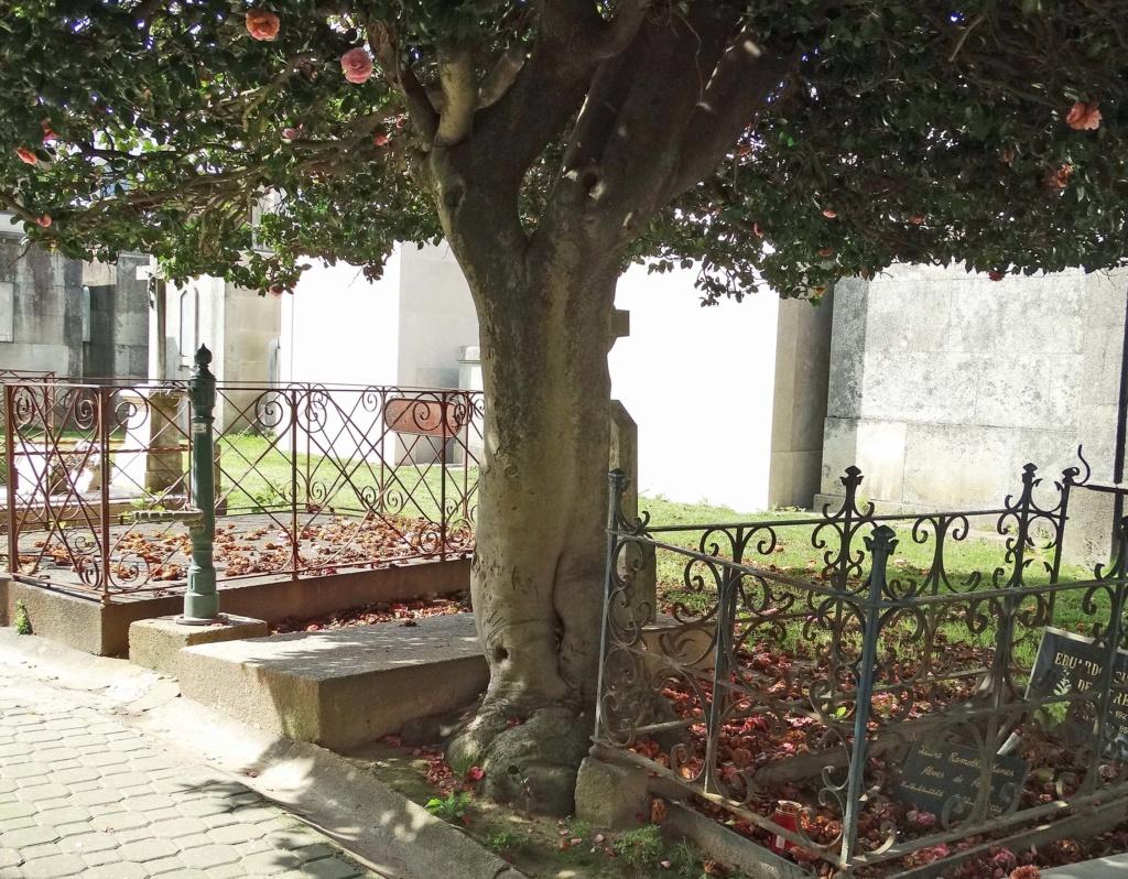 Camellia - choix & conseils de culture - Page 2 Porto-13