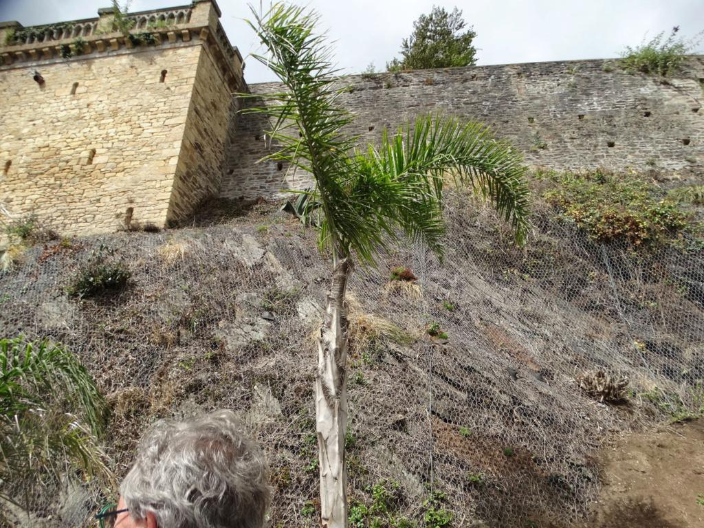 Jardin extraordinaire sur les falaises de Brest Poulli10