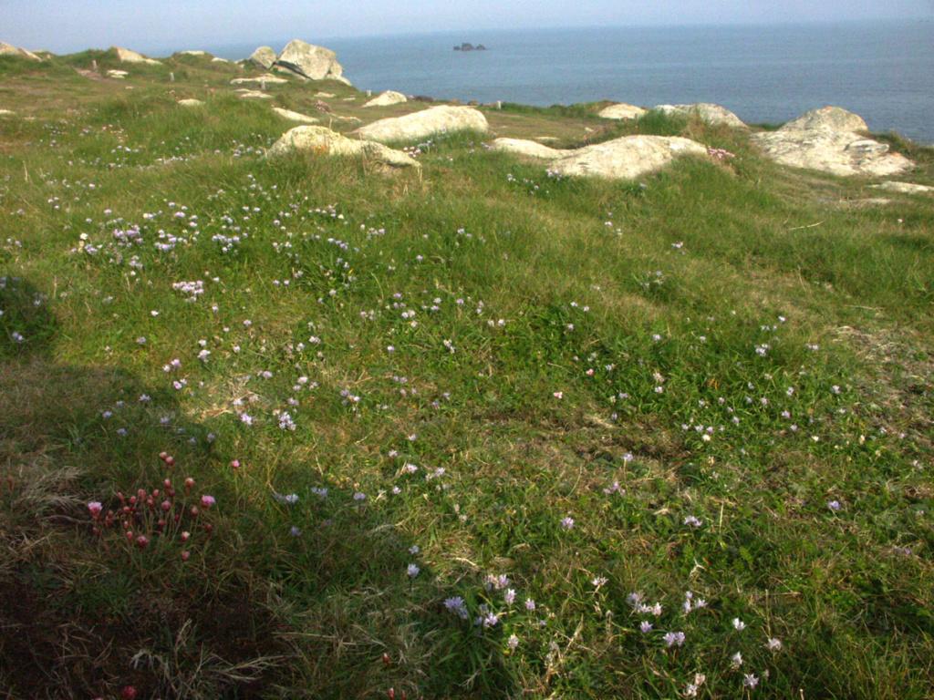 Balade sur la côte sauvage en Finistère-Nord Route_10