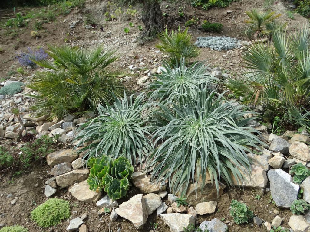 Jardin extraordinaire sur les falaises de Brest Son_no10