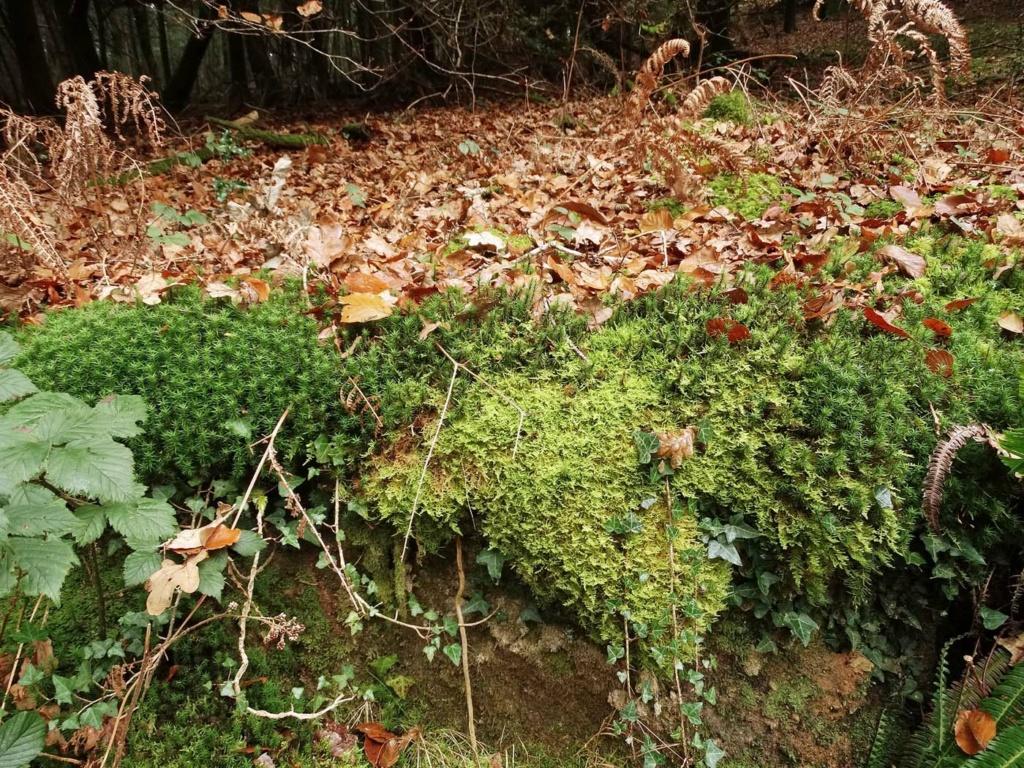 Mousses, lichens et autres fantaisies de l'hiver St-riv13