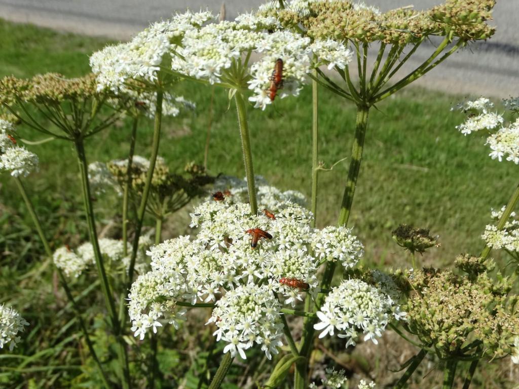 """Déficoncours """"Les insectes sur les plantes"""" - les participations - Page 2 Ze_qui11"""