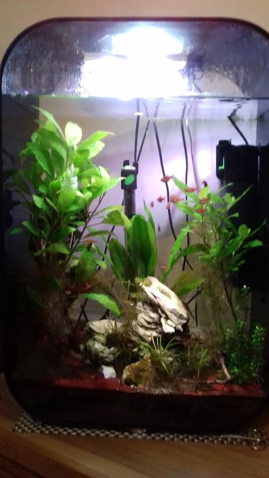 Installation / problème d'eau et mort poisson - Page 2 20180312