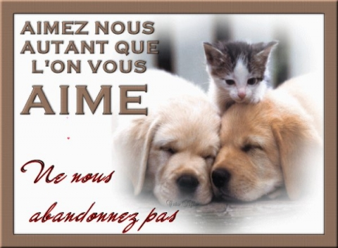 Animaux en Images  - Page 6 35202011