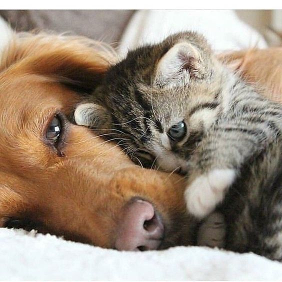 Animaux en Images  - Page 5 504f4010