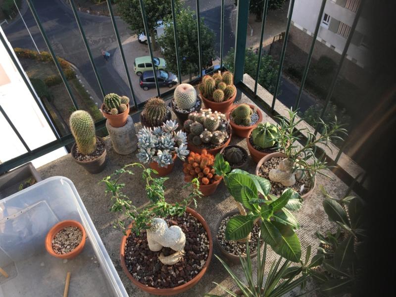 Sur mon balcon 00122