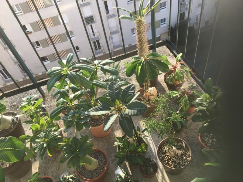 Sur mon balcon 00517