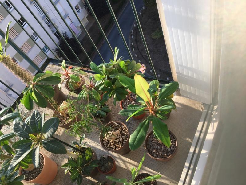 Sur mon balcon 00617