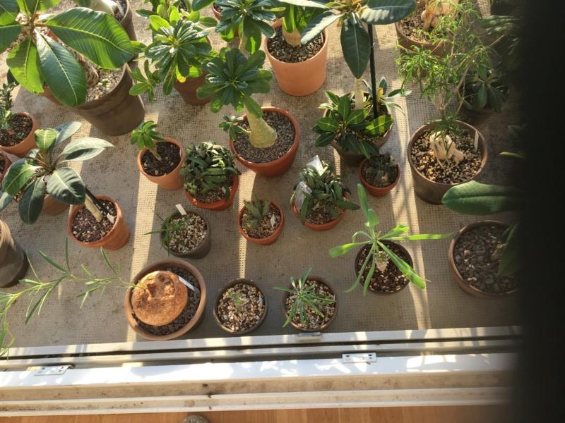 Sur mon balcon 00722