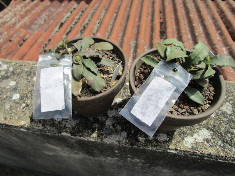 Euphorbia francoisii - Page 17 Img_1413