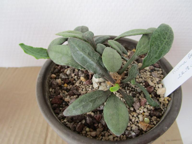 Euphorbia francoisii - Page 18 Img_1718