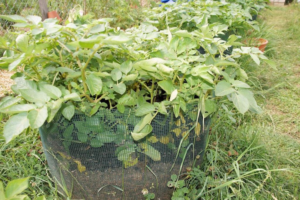 Tour à pommes de terre Dsc05227