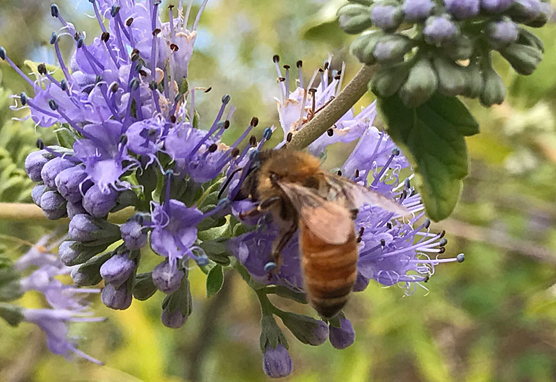 What Happened to the Bees & Buterflies?  Bee11