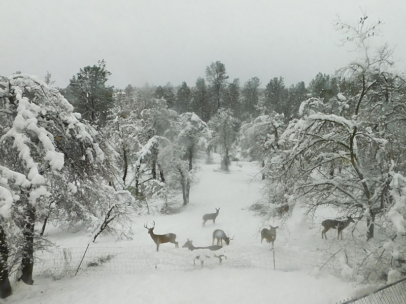 Any Strange and Wonderful Visitors? Photos please! - Page 10 Deer10